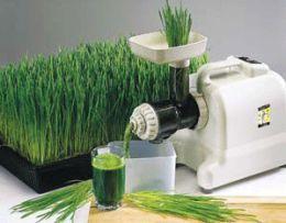Wheatgrass Juice from mekonfarm.com